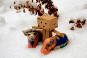 1st Feb 2014 - On an Unusual Winter Safari