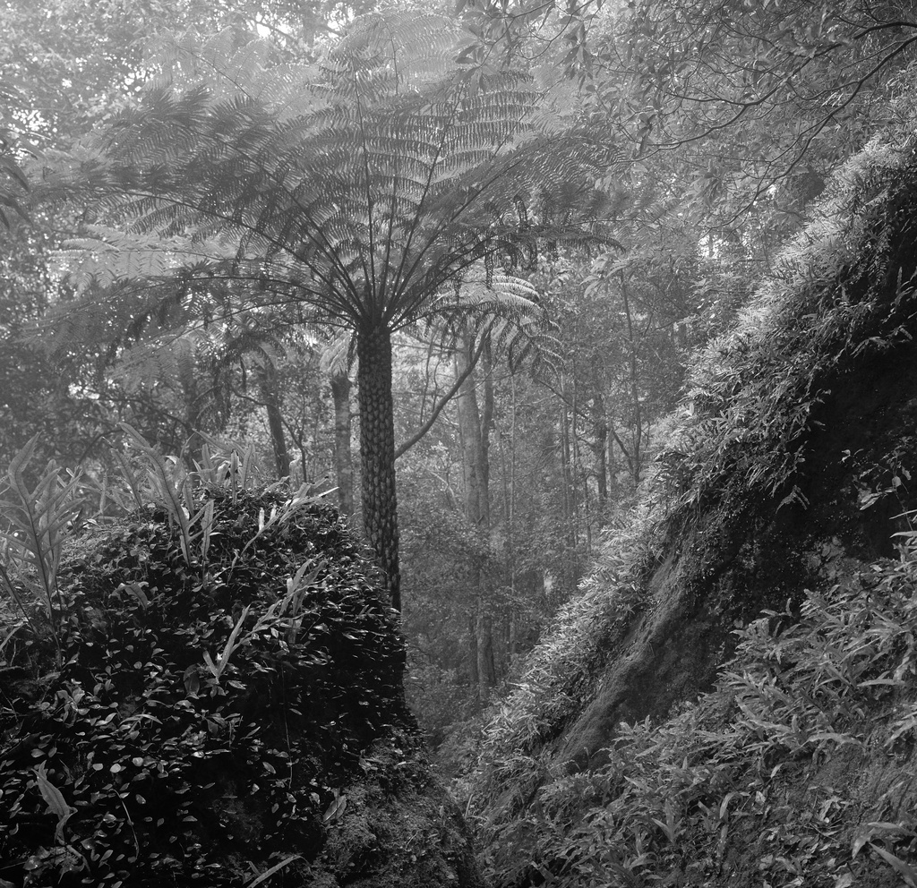 Rainforest in the clouds by peterdegraaff