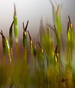 2nd Feb 2014 - Metallic Moss.....