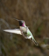 4th Feb 2014 - Hummer Hover