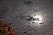 21st Sep 2010 - Moonlight