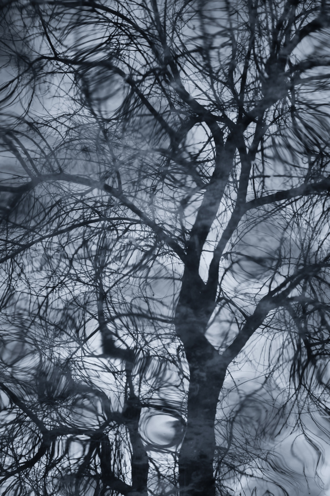 Tree of Dreams by pflaume