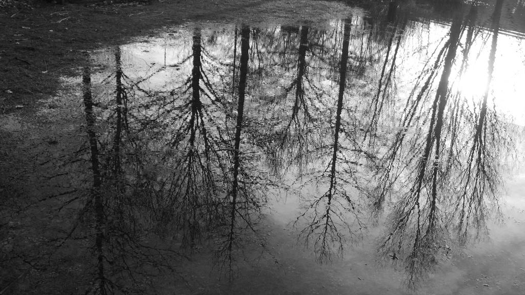Trees reflecting by bizziebeeme