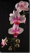 5th Feb 2014 - Beautiful Orchid!