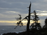 30th Jan 2014 - Ucluelet Silhouette