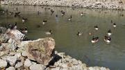 6th Feb 2014 - Quack, quack