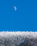 23rd Jan 2014 - Deep Freeze