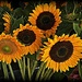 Farmer's Market Flowers by peggysirk