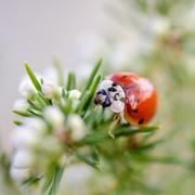 7th Feb 2014 - Ladybird - 7-02