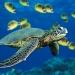 Turtle by rodagostinho