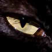 8th Feb 2014 - Cats eye - 8-02