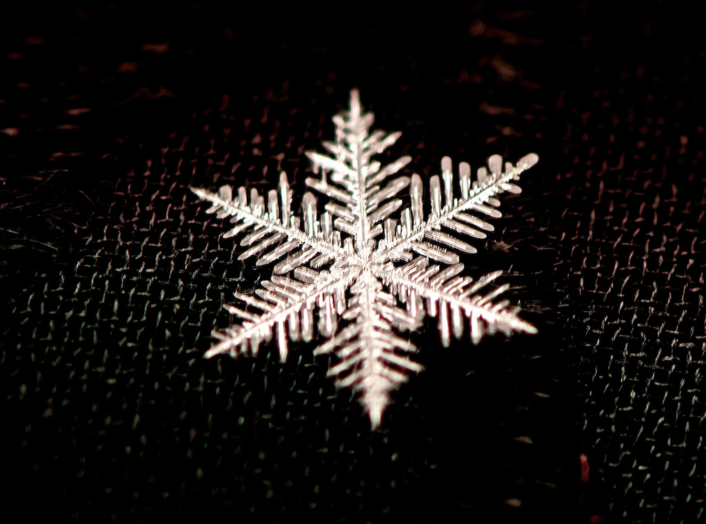 Snowflake At Last by taffy