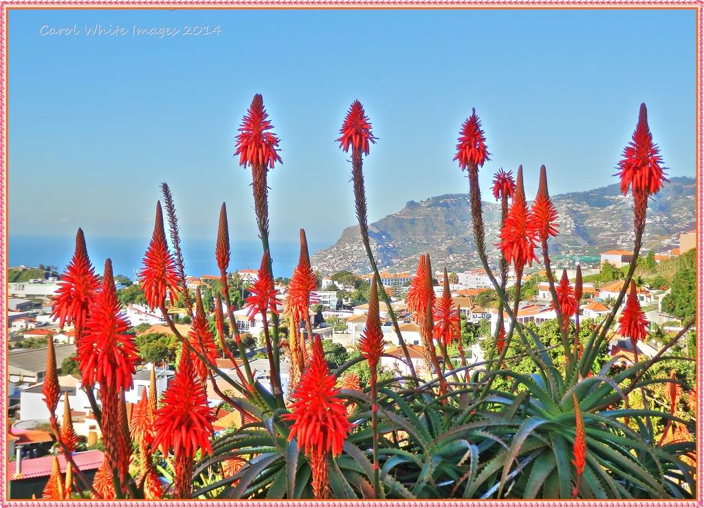 Madeira by carolmw