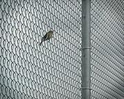 9th Feb 2014 - Bird on a wire