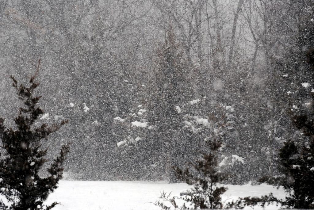 Softly Falling Snow by genealogygenie