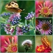 Nature Collage by genealogygenie