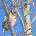 Owl's Eye View by lyndemc