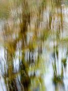 12th Feb 2014 - Rain washed landscape - 12-02