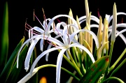 24th Sep 2010 - Mystery Plant