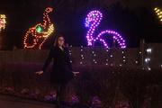23rd Dec 2013 - Oglebay Flamingo