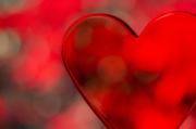 14th Feb 2014 - Red Hot Love