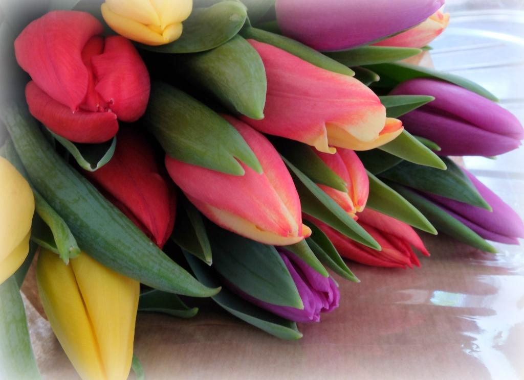 spring............ by quietpurplehaze