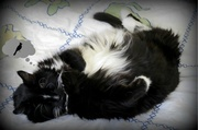 15th Feb 2014 - Soft furry kitty dreaming of spring