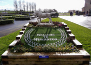 15th Feb 2014 - At the races - 15-02