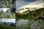15th Feb 2014 - Collage Mt Rainier