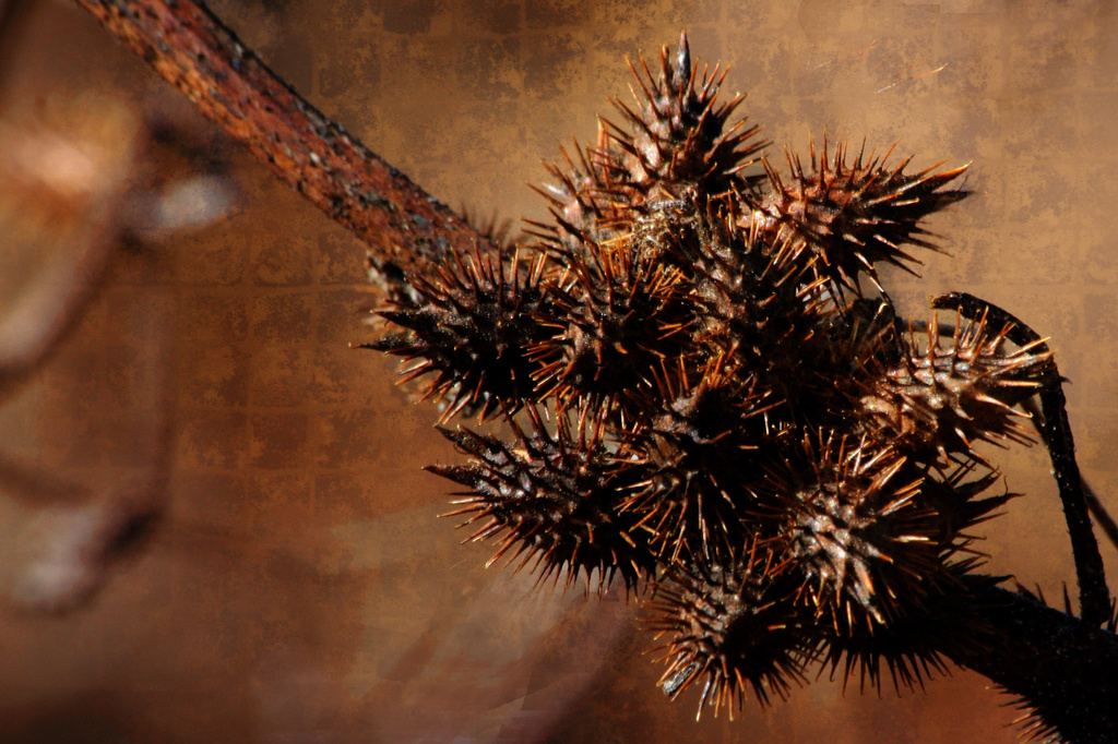 Burrs in Brown by milaniet