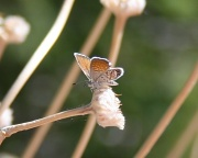 24th Sep 2010 - Tiny Butterfly