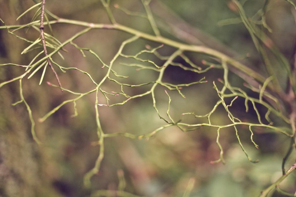 Web by tina_mac