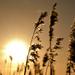 Sunset 2 by richardcreese
