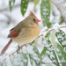 Cardinal in snow by mccarth1