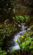 21st Feb 2014 - Spring Waters Run Abundantly