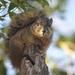 Squirrel watching me! by jamibann
