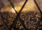 22nd Feb 2014 - Diamonds in the rain..........
