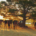 The Waiting Horses by salza