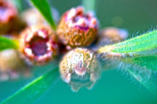 Free lensing  by sugarmuser