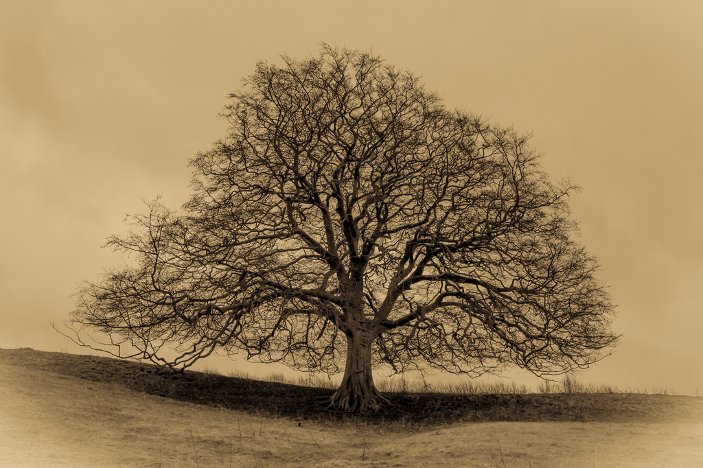 Tree on a Hill by rachelwithey
