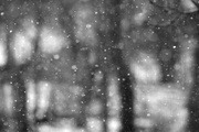 25th Feb 2014 - Flakes falling on trees