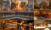 25th Feb 2014 - NYC Meets Chicago in an Orange Collage