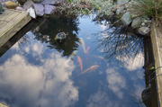 26th Feb 2014 - 2014 02 26 - Fish in Sky Pond
