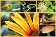 24th Feb 2014 - Collage orange/yellow