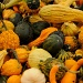 Decorative gourds and winter squash by dora