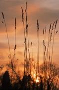 3rd Mar 2014 - Sunset through the Grass.....