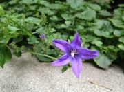 4th Mar 2014 - Purple Star