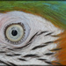 Macro Macaw Eye by lyndemc