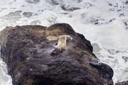 6th Mar 2014 - Sea Lions