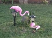 7th Mar 2014 - Flamingo Down